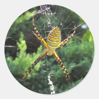 Banded Garden spider ~ sticker