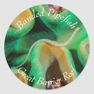 Banded Pipefish on the Great Barrier Reef Classic Round Sticker