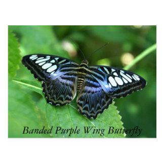 Banded Purple Wing Butterfly Postcard