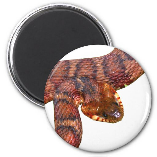 Banded Water Snake 2 Inch Round Magnet
