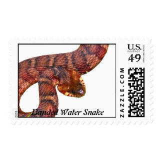 Banded Water Snake Stamp