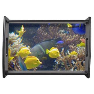 Bandeja de la porción de los pescados del arrecife