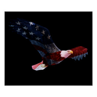 Bandera americana Eagle calvo Poster