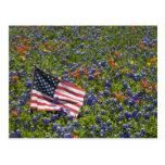 Bandera americana en el campo de los capos azules, postales