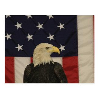 Bandera americana y postal de Eagle calvo