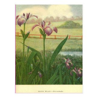 Bandera azul floral tarjetas postales