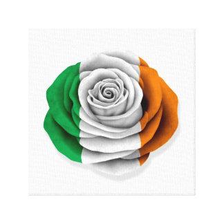 Bandera color de rosa irlandesa en blanco impresiones de lienzo