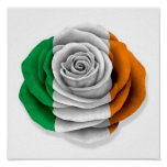 Bandera color de rosa irlandesa en blanco impresiones