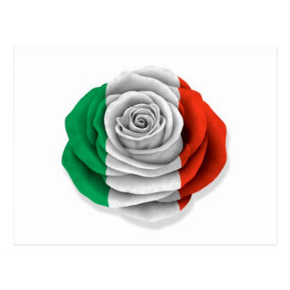 Bandera color de rosa italiana en blanco tarjeta postal