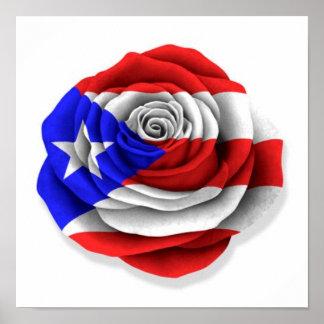 Bandera color de rosa puertorriqueña en blanco póster