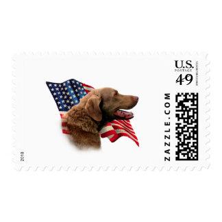 Bandera del perro perdiguero de bahía de estampilla