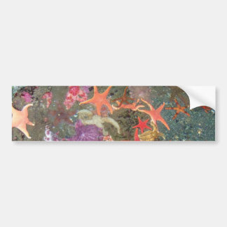 Banderas coloridas de las estrellas de mar pegatina de parachoque