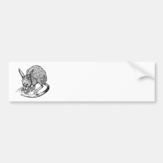 Bandicoot Bumper Sticker