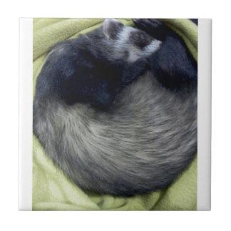 Bandido el dormir del hurón azulejo cuadrado pequeño