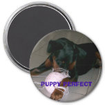 bandit 009, PUPPY PERFECT Magnets