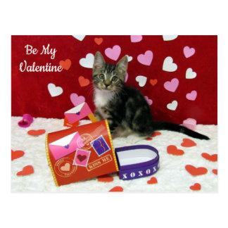 Bandit's Valentine's Post Card (Tabby Kitten)