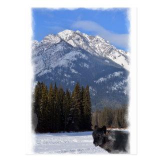 Banff Wolf in Winter with Mt Cascade Postcard