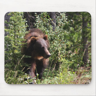 Banff's Grizzly Bear 64 Mouse Pad