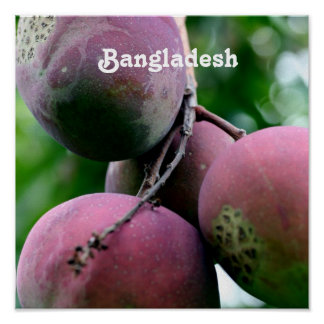 Bangladesh Mango Tree Poster