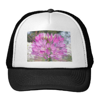 bangladeshi beauty trucker hat
