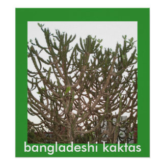 bangladeshi kaktas poster