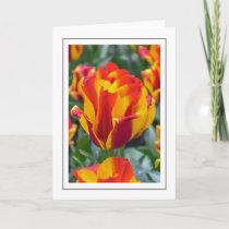 Banja Luka tulips greeting card