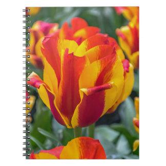 Banja Luka tulips notebook