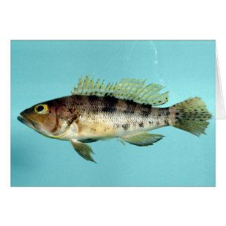 Bank Sea Bass Greeting Card