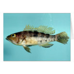 Bank Sea Bass Greeting Cards