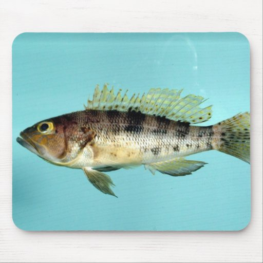 Bank Sea Bass Mousepads