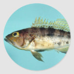 Bank Sea Bass Stickers
