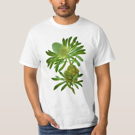 Banksia Serrata T Shirt