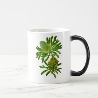 Banksia Serrata Taza Mágica