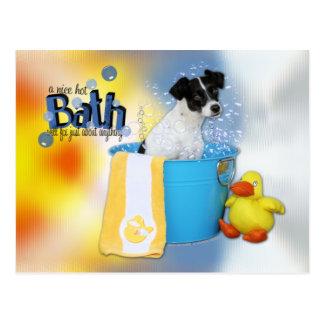 Baño caliente - rata Terrier - Rosco Postal