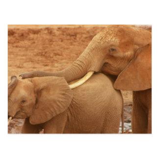 Baño de la postal del elefante del bebé