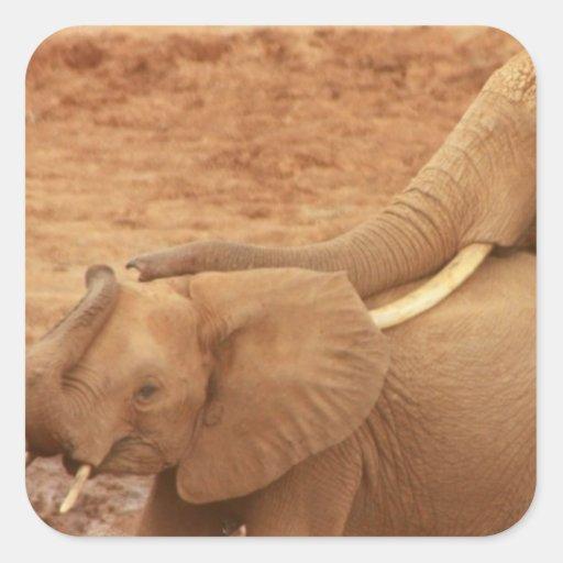 Baño de los pegatinas del elefante del bebé calcomanías cuadradass