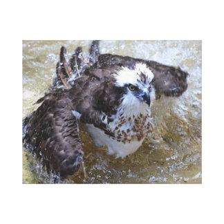 Baño de Osprey Lona Envuelta Para Galerias