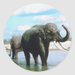Baño del elefante etiqueta redonda