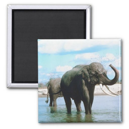 Baño del elefante imán de frigorifico