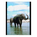 Baño del elefante tarjeta postal