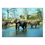 Baño del fango de los elefantes indios felicitacion
