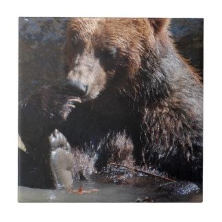 Baño del oso azulejo cuadrado pequeño