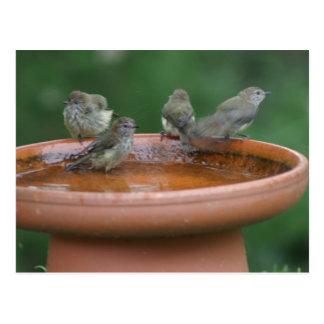 Baño del pájaro postal