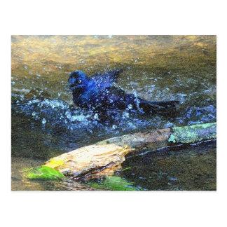 Baño del pájaro tarjetas postales