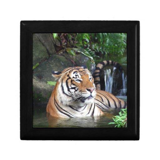 Baño del tigre de Sumatra Caja De Regalo