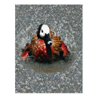 Baño hecho frente blanco de la acuarela del pato tarjetas postales