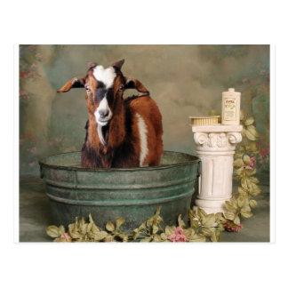 Baños de la necesidad de las cabras también postal