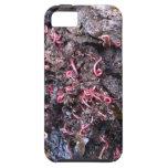 Banquete del gusano iPhone 5 cárcasas