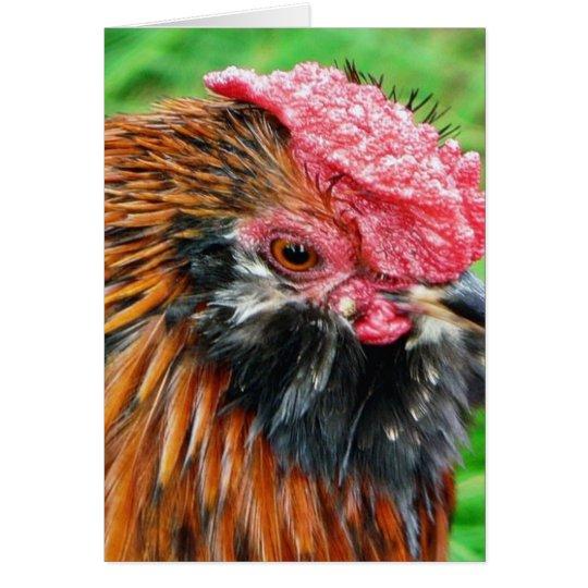 Bantam Hen Animal Card