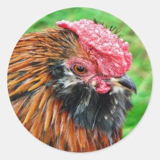 Bantam Hen Animal Sticker